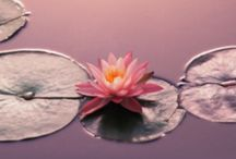 Holistic Services  / Tiffany is a certified Atlantean, Crystal and Usui Reiki Master Teacher, and incorporates her Psychic Medium abilities, Spiritual Counseling, Shamanism and Tibetan Bowl within the Healing session. / by Tiffany Foster-White