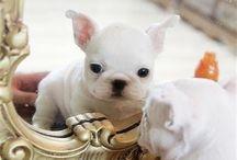 Puppies!!! <3 / by Sabri Lo