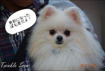 Dog / ☆Cute dog's photo☆  I like dogs. Even among those I like Shiba and Pomeranian especially:D / by Happy Sachi