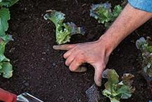 Gardening / by Kate Bingham Harris
