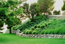 Hillside Gardens / by Jennifer Tippett