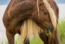 horses / by Barbara Dunne