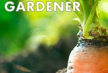 Gardening / by Lindamaria Quintero