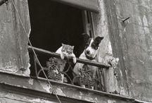 ANIMALS WITH LOVE / i need a cat like a princess and a dog like a spartan :) / by Penelope Bellavia
