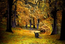 i fall for fall / by Alicia Campbell
