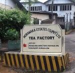 Sri Lanka Tea Farms / by International Tea Farms Alliance