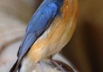 Birds / by Lea Valle | Paleo Spirit