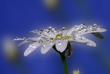 Dew / Dewdrops, raindrops, waterdrops ..... / by Susanne Fountain