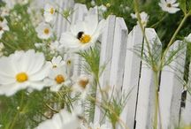 Flowers / by Irena Warnke