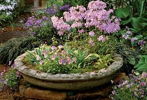 Garden ... Containers/Combos / by Linda Pierce
