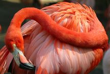 Flamingo love / by Sharon Bitner