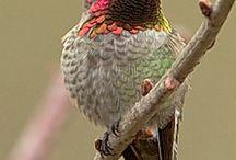 hummingbirds / by Barbara McMahan