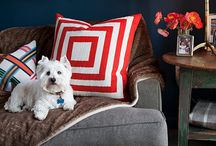 Design Inspiration / by inubar - Design for Pets