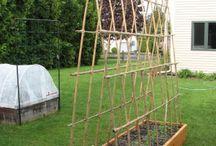 Vertical Gardening / by Jennifer Brennan