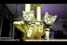 Gatos / by sonia suárez suances