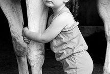 Horses / by Angela Ilsley
