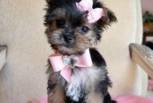 adorable little animals :) / by Amanda Usey
