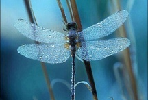 Dragonflies / by Mary Ellis