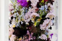 flowers & florals / by anabela / fieldguided