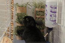 Bunny Rabbit Tips / by Jessica Mallory