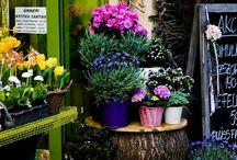 flower shop / by Carlos tenorio