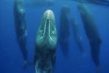 Whale of a Tale / by Rachel Murdock