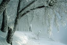 winter and christmas / by Robin Wells