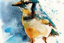 jay birds / by Laura Hill