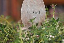 Garden Inspiration / by Raychel A