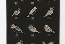 put a bird on it / by Amanda Jones