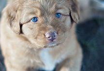 So fluffy! / by Brooke Haugen