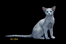 RUSSIAN BLUE / by Cat Fanciers Association