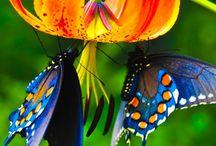 Butterflies and moths / by Griselda Fernandez