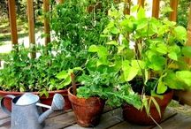 Garden in Pots and other containers / Gardening in a Pot / by Sherry Goodloe