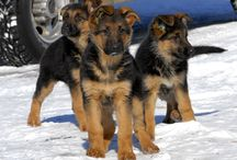 Puppies / by Connie Erikson