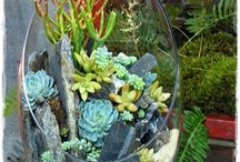 Succulents / by beverly frey