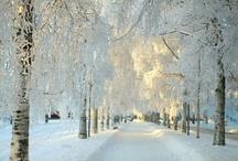 Snow / by Angie Strum