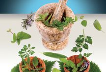 Herbology / by Terri Stoddard