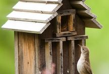 Birds & Birdhouses / by Cheryl Silva Burrhus