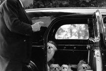 Robert Doisneau photos / fotos do fotógrafo francês / by Claucia Nascimento