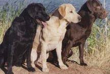 I <3 animals! / by Brandy Brown