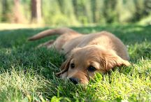 Dogs I love!!! / by Leila Salazar Sanchez