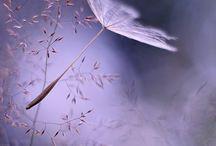 Color me: Lavender / Lilac / Color / by Clarice Larkin