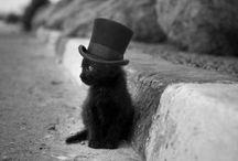Kute Kitties!! / by Tiffany Peterson
