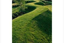 Lawn / by Mary Henderson Maurel