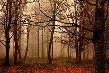 fall / by Leslie Bingham