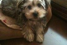 Puppy love / by Melissa Bussear