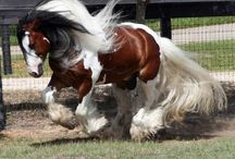 Draft horses / by Suzanne Hahto
