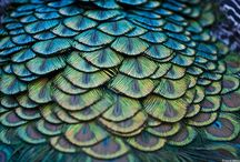 palette: peacock / this color combination always pleases me. always. / by Allison Parks