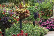 Garden Dreams @The Lazy T / loving landscape and gardens on 5 1/2 acres / by Lazy T B and B